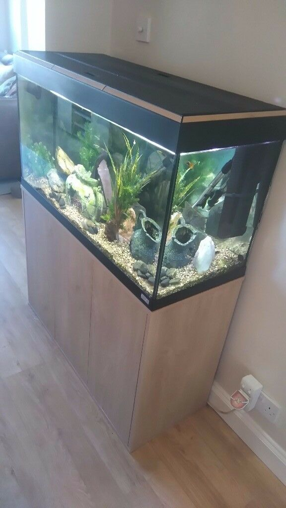 Fluval Roma Tank,cabinet,hood and lighting for sale