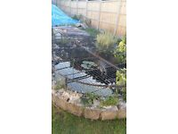 Pre-Formed Large Kidney Shape Garden/Fish Pond With Metal Safety Cover
