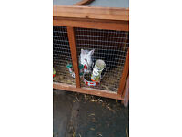 black rabbit free to good home comes with cage and food
