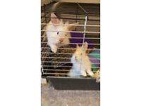 2 sister rabbits