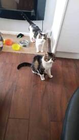 Two boys now rehomed