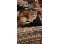 Missing Cat - Mitcham