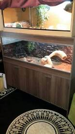 2 large vivariums with two b.dragons