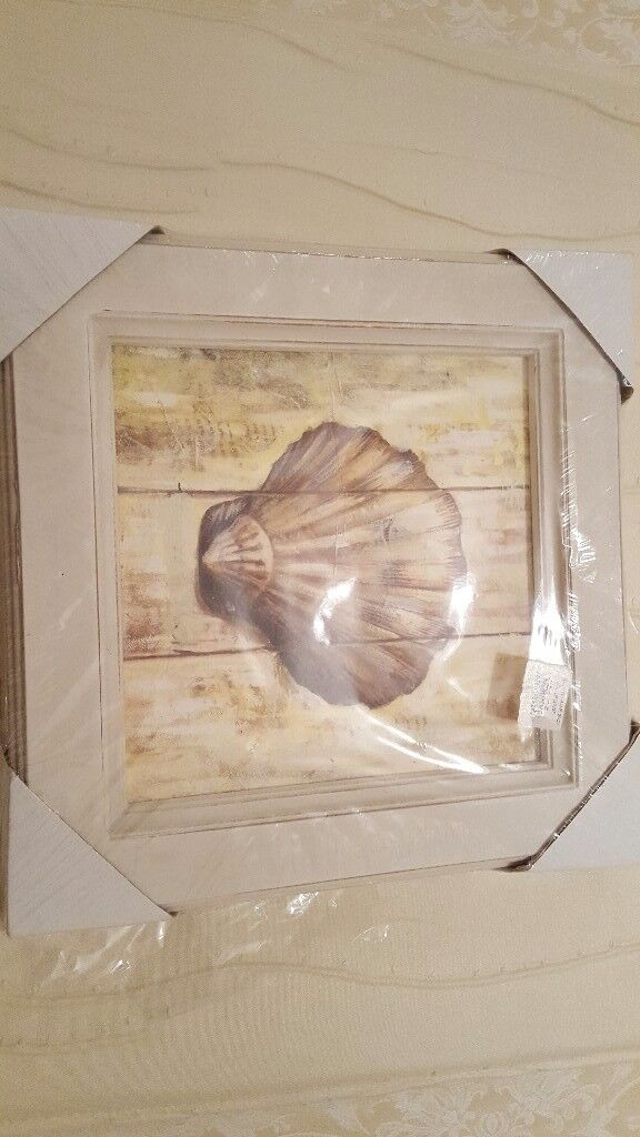 Shell Picture
