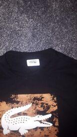 Large Lacoste tshirt