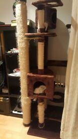 cat tree for sale (used)