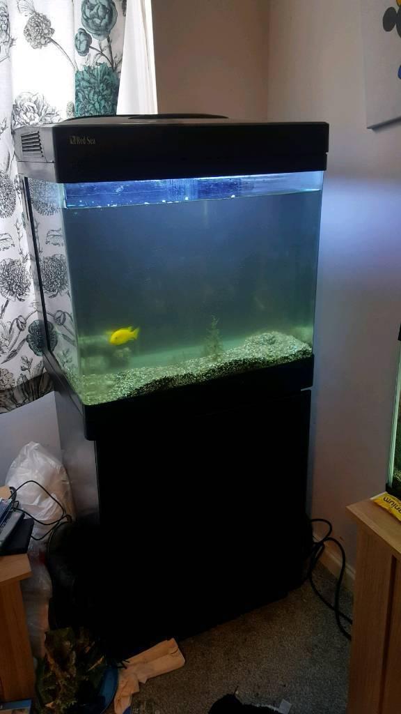 Red sea max 130 fish tank