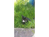 Lost kitten 4 months girl