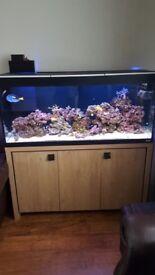 fluval roma 240 fish tank marine tank with deltec 500 skimmer, marine lighting and external filter