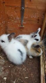 3 lovely baby rabbits for sale