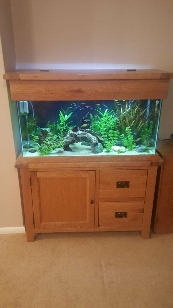 Aquarium/Fish tank oak