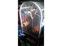 Animal or bird cage