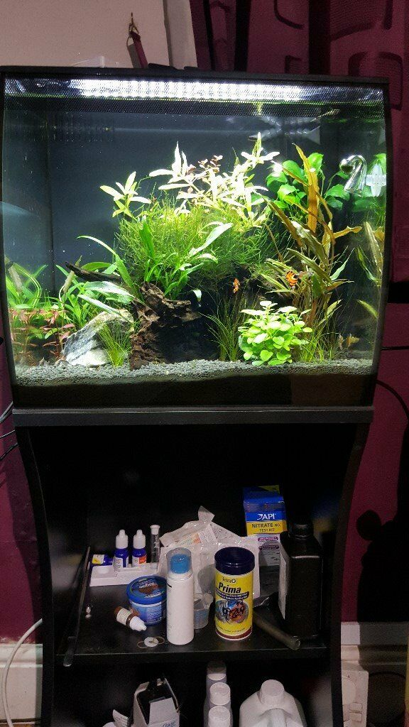 Fluval Flex 57 Tank And Stand In Grays Essex Gumtree
