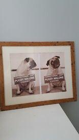 Picture frame pug photo print art