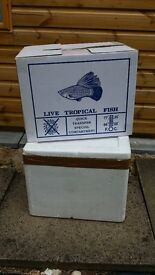 2 FISH TRANSPORTION BOXES