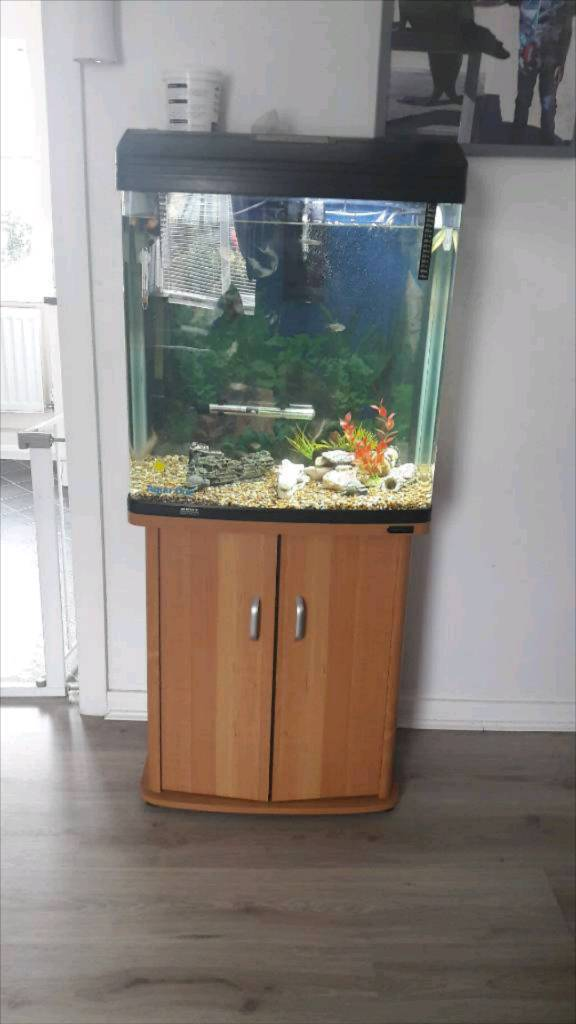 Reduced Aqua One 620t Fish Tank And Stand In Seaham