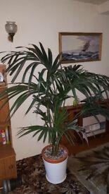 Palm tree Spain plant flower