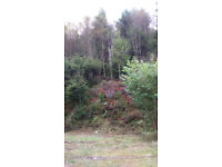 Beautiful Woodland for Sale in West Wales