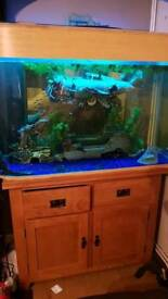 Large tropical fish tank setup with stand
