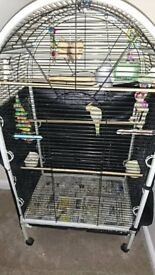 Pair cockatiels and full setup parrot cage