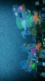 Fish tank orniments