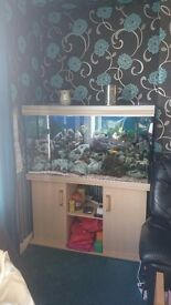 4ft fishtank full set up