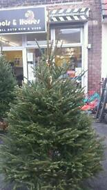 Real Christmas tree free base free delivery also lights for sale
