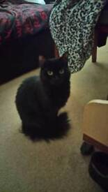 2 year old black cat