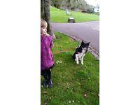 Dog walker needed G2 3PT