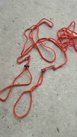 3x small animal harness and lead