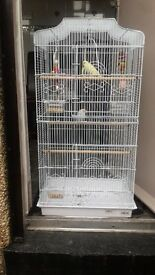 Budgie cage with toys and two baby budgies for sale ( 5 month)