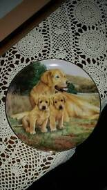 Labrador Painted Plate