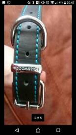 Medium sized dog collar