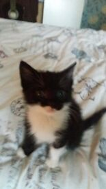 Kitten ready now for rehoming. £60 cuddly and playful. Litter trained and weaned