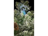 6.5 ft used green xmas tree ( working )