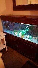 Fish Tank & Base - 4 ft Approx 180L