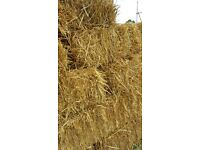 Hay Bales available for festival or feed, buyers collect