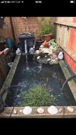 Large fish pond with all filters and 3x return pumps, UV lamp....and all fish