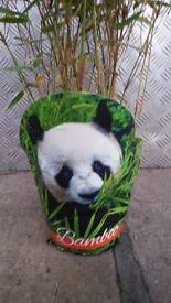 Beautiful, healthy bamboo plants