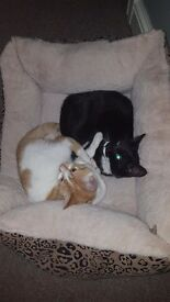 A pair of cats under the age of one. £ 20 for both to ensure a good home or £10 separate.