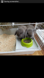 twins girls baby rabbits with the cage and accessories for sale