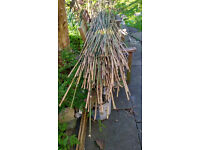 Large quantity of assorted bamboo canes