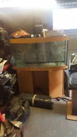 fish tanks multiple