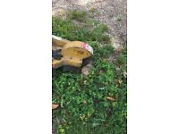 Tree surgery Stump grinding wood chipping services