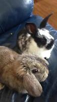 Two ADORABLE Bunnies for sale!!