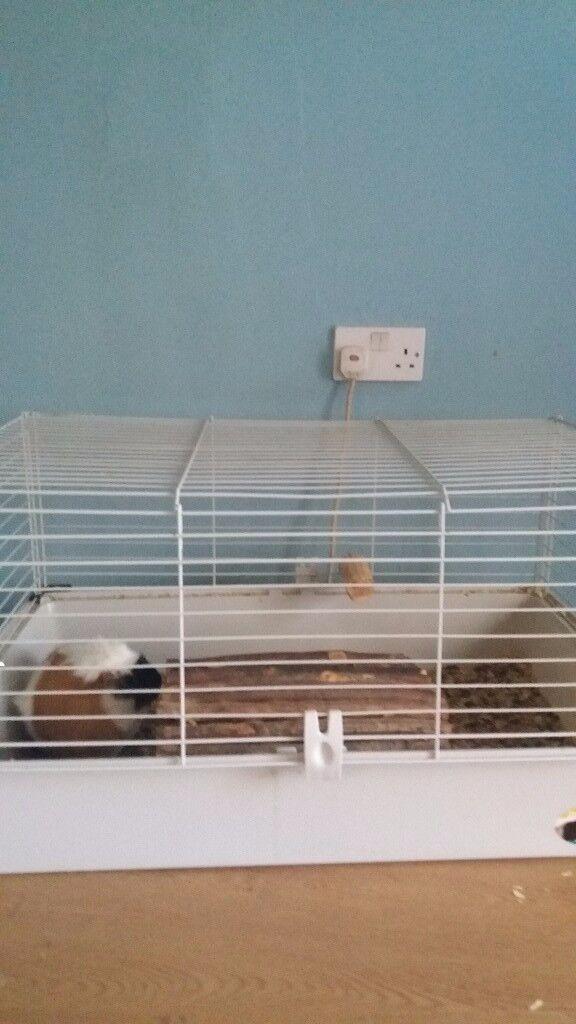 Large Indoor pet cage