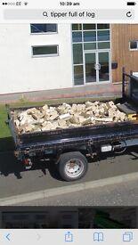 Ash wood logs
