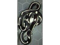 Dot dash king snake