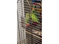 2x parrots cage and toys
