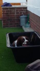 Dog Bath / Plasterers Trough